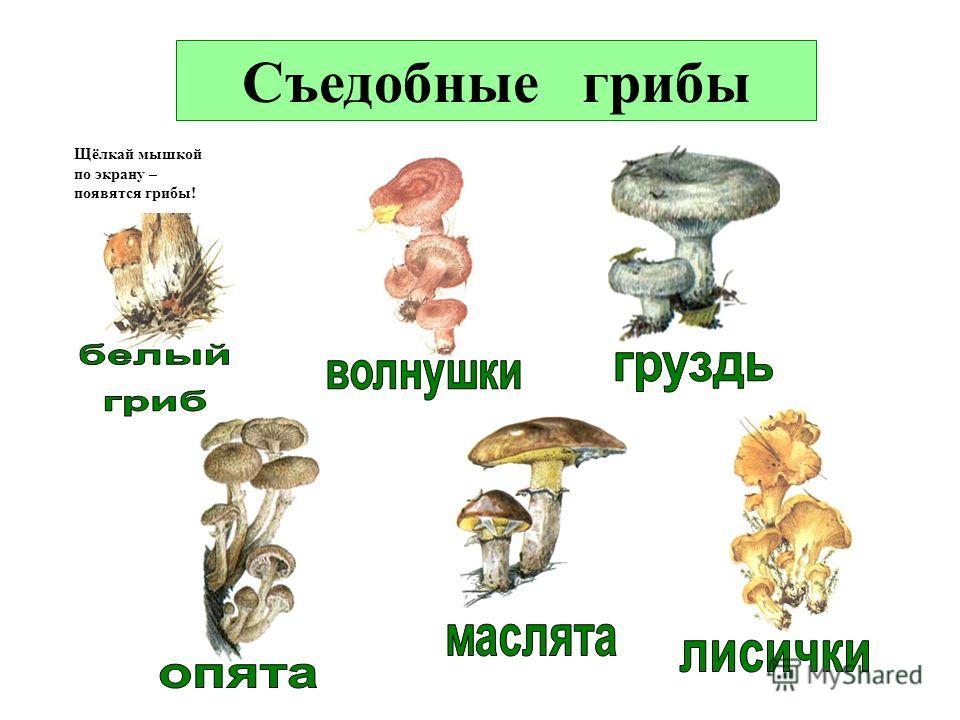 ГРИБЫ съедобные грибы ядовитые грибы грибы, занесённые в Красную книгу