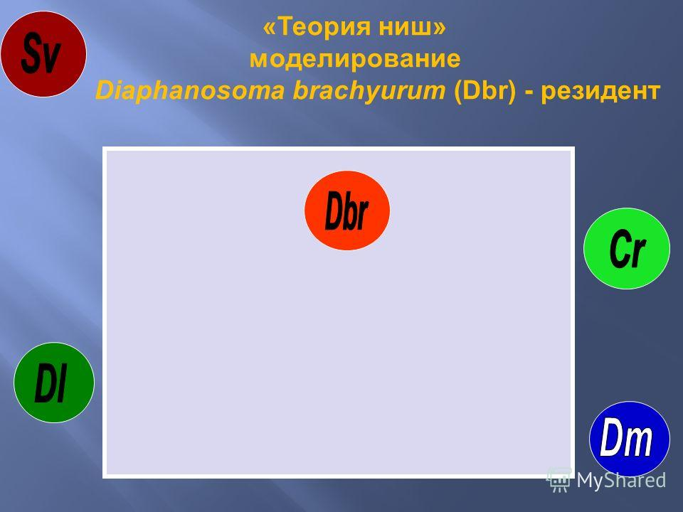 «Теория ниш» моделирование Diaphanosoma brachyurum (Dbr) - резидент
