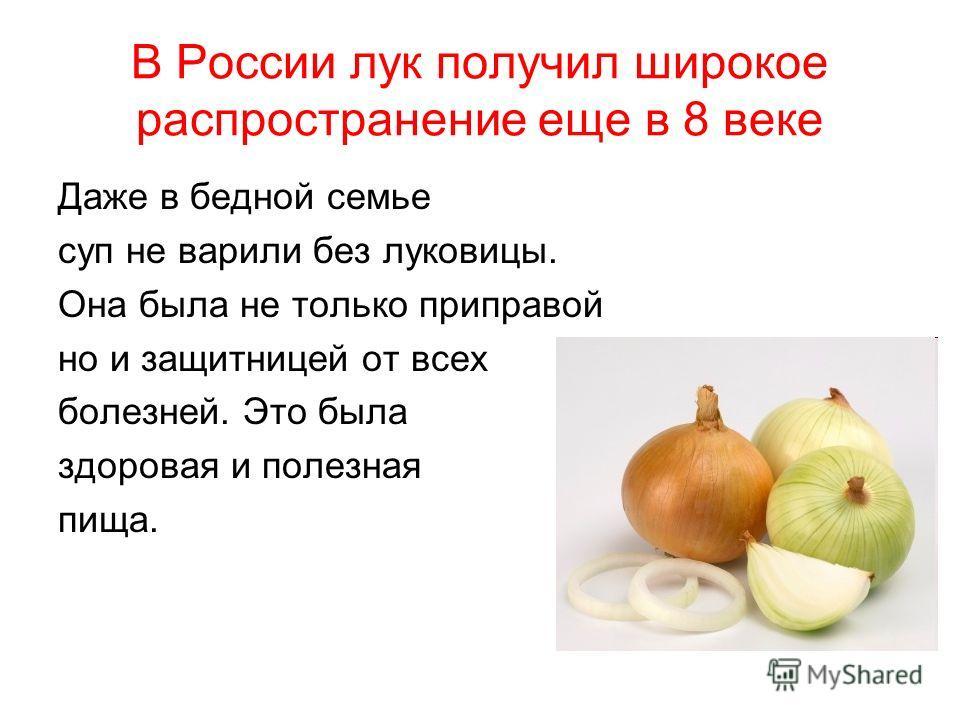 В России лук получил широкое распространение еще в 8 веке Даже в бедной семье суп не варили без луковицы. Она была не только приправой но и защитницей от всех болезней. Это была здоровая и полезная пища.