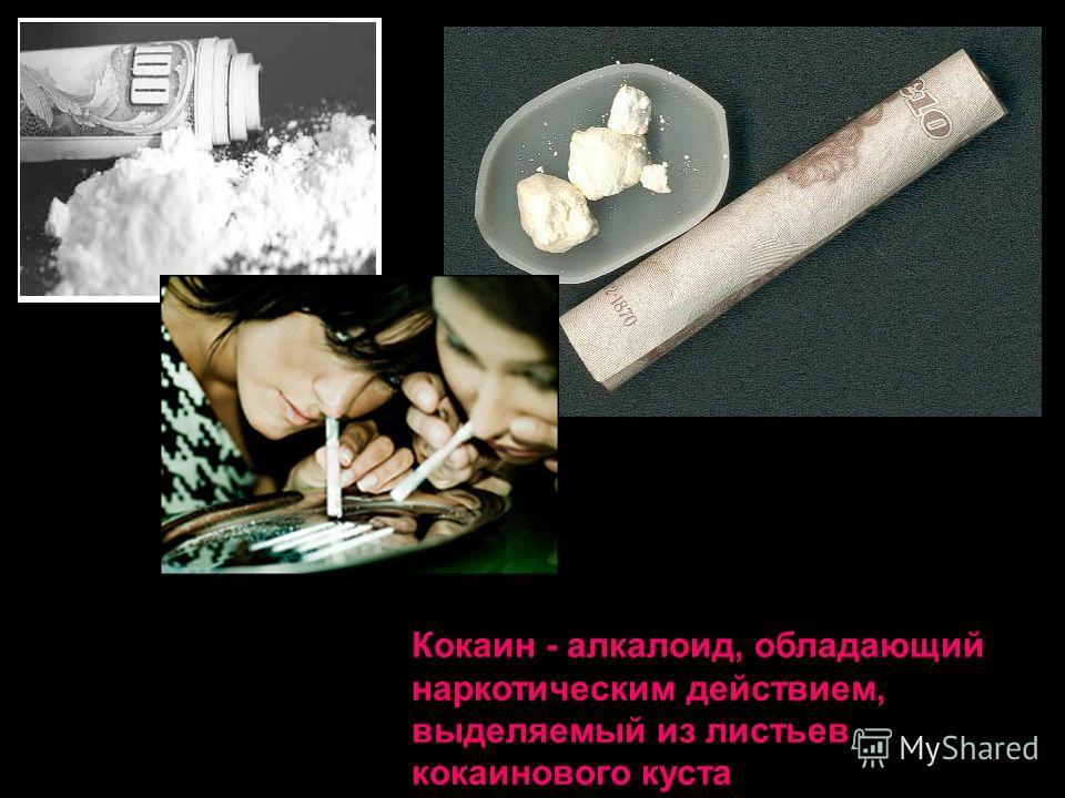 Кокаин - алкалоид, обладающий наркотическим действием, выделяемый из листьев кокаинового куста