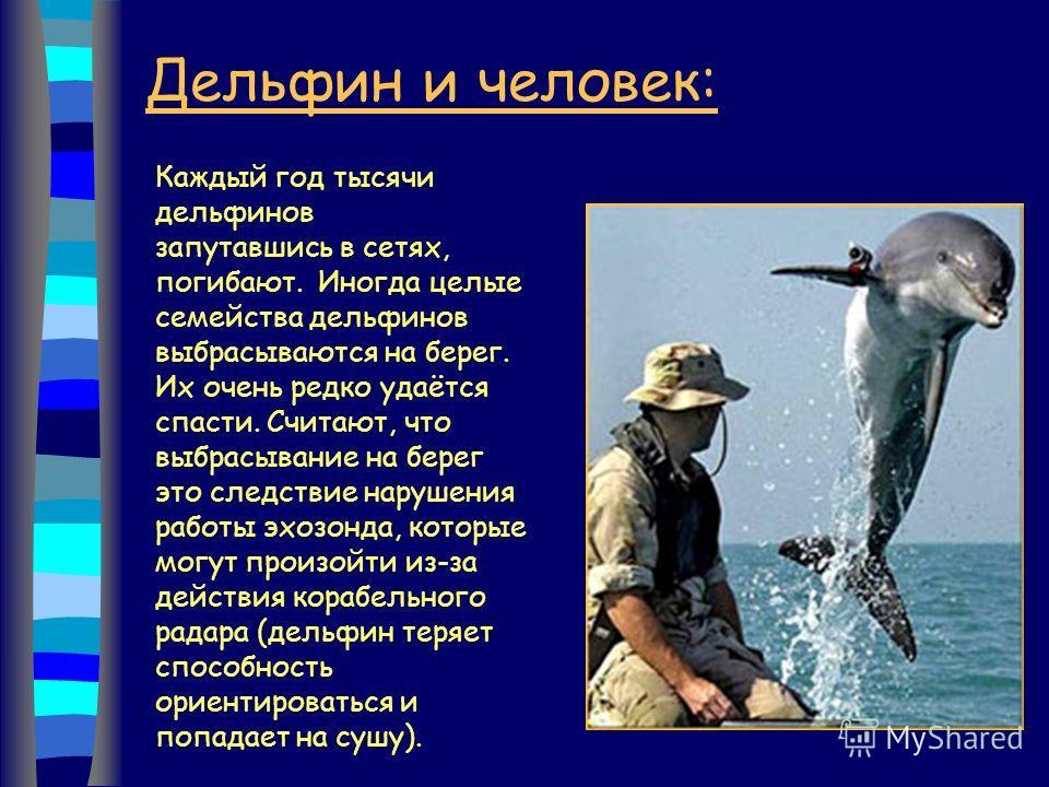 Дельфин и человек: Каждый год тысячи дельфинов запутавшись в сетях, погибают. Иногда целые семейства дельфинов выбрасываются на берег. Их очень редко удаётся спасти. Считают, что выбрасывание на берег это следствие нарушения работы эхозонда, которые