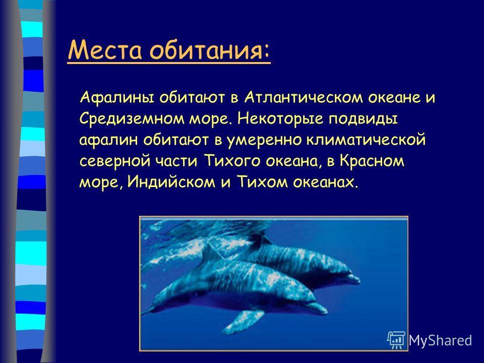 Места обитания: Афалины обитают в Атлантическом океане и Средиземном море. Некоторые подвиды афалин обитают в умеренно климатической северной части Тихого океана, в Красном море, Индийском и Тихом океанах.