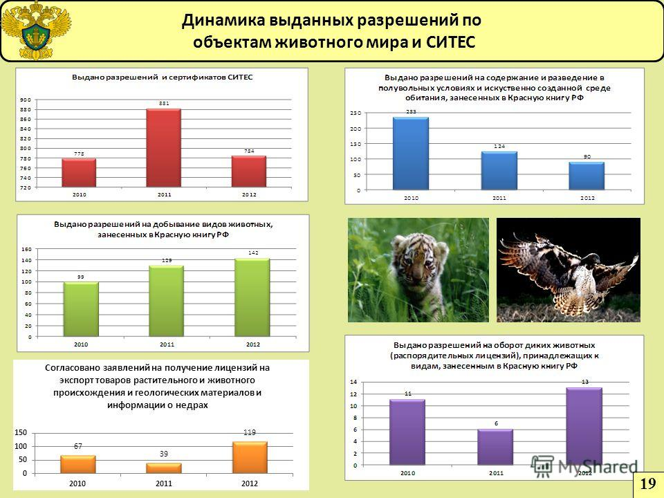 Динамика выданных разрешений по объектам животного мира и СИТЕС 19