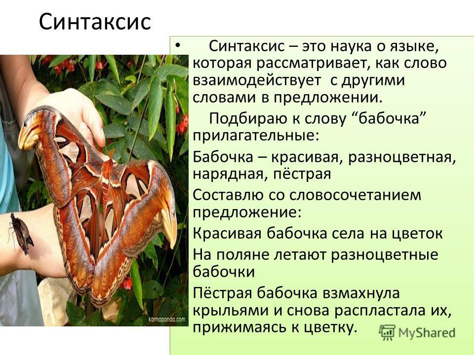 Синтаксис Синтаксис – это наука о языке, которая рассматривает, как слово взаимодействует с другими словами в предложении. Подбираю к слову бабочка прилагательные: Бабочка – красивая, разноцветная, нарядная, пёстрая Составлю со словосочетанием предло