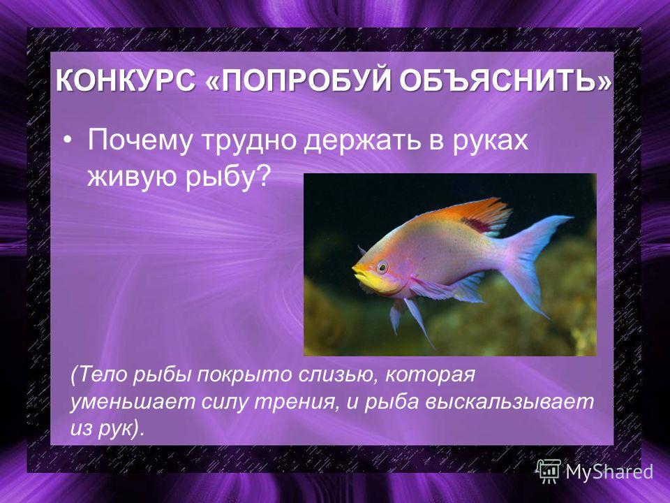 КОНКУРС «ПОПРОБУЙ ОБЪЯСНИТЬ» Почему трудно держать в руках живую рыбу? (Тело рыбы покрыто слизью, которая уменьшает силу трения, и рыба выскальзывает из рук).