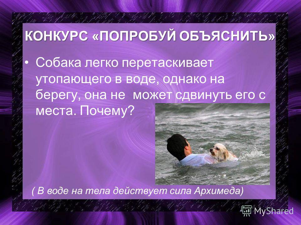 КОНКУРС «ПОПРОБУЙ ОБЪЯСНИТЬ» Собака легко перетаскивает утопающего в воде, однако на берегу, она не может сдвинуть его с места. Почему? ( В воде на тела действует сила Архимеда)
