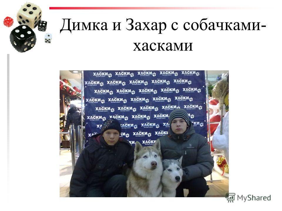 Димка и Захар с собачками- хасками