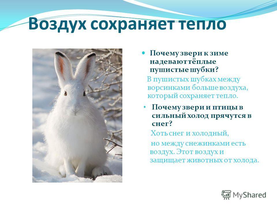 Воздух сохраняет тепло Почему звери и птицы в сильный холод прячутся в снег? Хоть снег и холодный, но между снежинками есть воздух. Этот воздух и защищает животных от холода. Почему звери к зиме надевают тёплые пушистые шубки? В пушистых шубках между