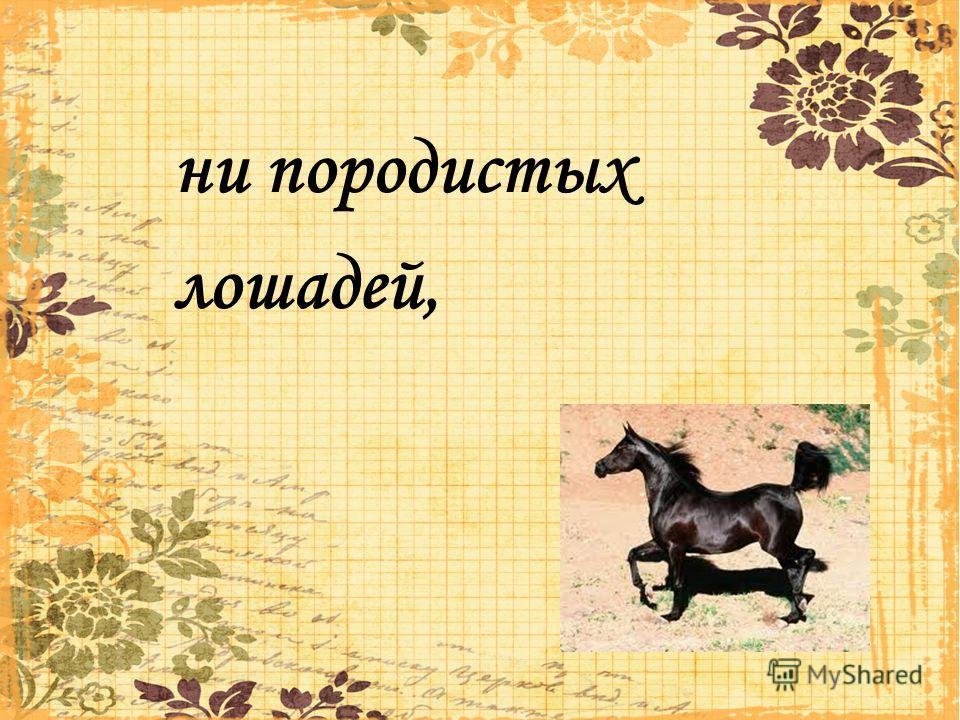 ни породистых лошадей,