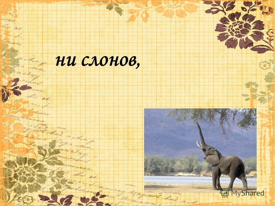 ни слонов,