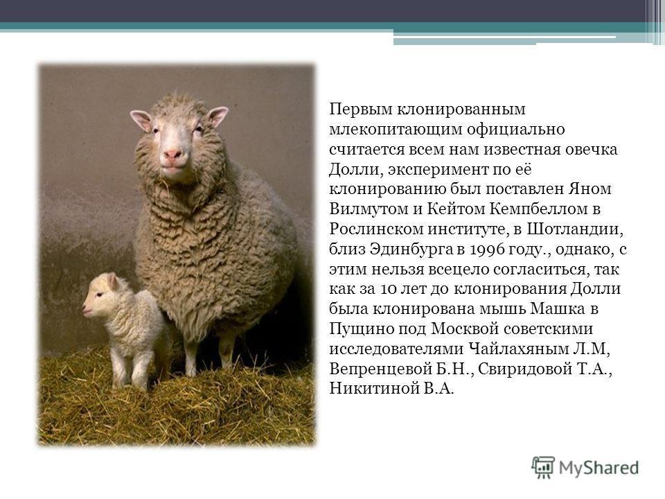 Первым клонированным млекопитающим официально считается всем нам известная овечка Долли, эксперимент по её клонированию был поставлен Яном Вилмутом и Кейтом Кемпбеллом в Рослинском институте, в Шотландии, близ Эдинбурга в 1996 году., однако, с этим н