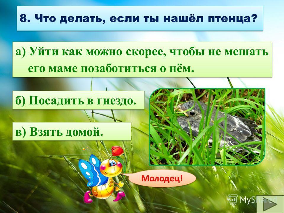 7. Что делать, если ты нашёл птичье гнездо? а) Подойти поближе и внимательно рассмотреть. а) Подойти поближе и внимательно рассмотреть. в) Потрогать и уйти. б) Уйти как можно быстрее, так как любая задержка у гнезда обычно замечается хищниками, котор