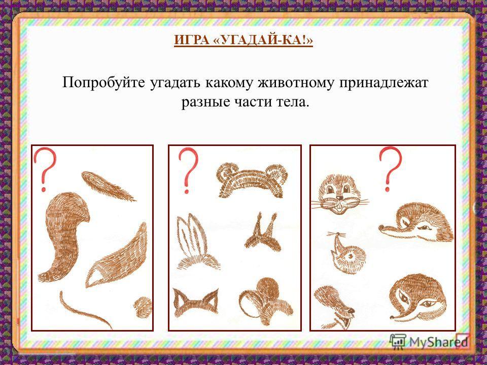 ИГРА «УГАДАЙ-КА!» Попробуйте угадать какому животному принадлежат разные части тела.