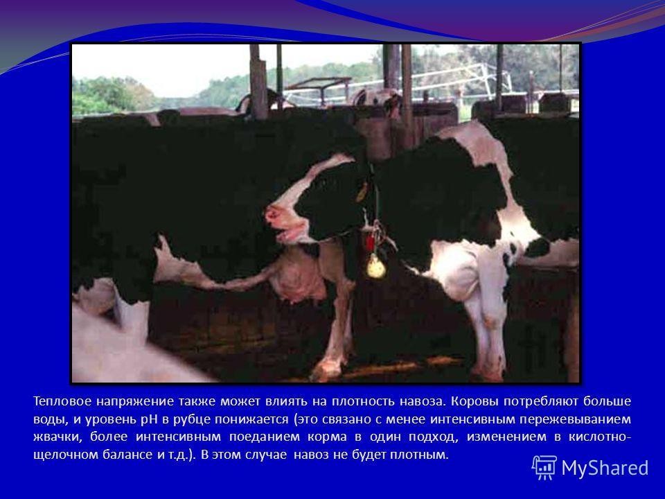 Тепловое напряжение также может влиять на плотность навоза. Коровы потребляют больше воды, и уровень pH в рубце понижается (это связано с менее интенсивным пережевыванием жвачки, более интенсивным поеданием корма в один подход, изменением в кислотно-