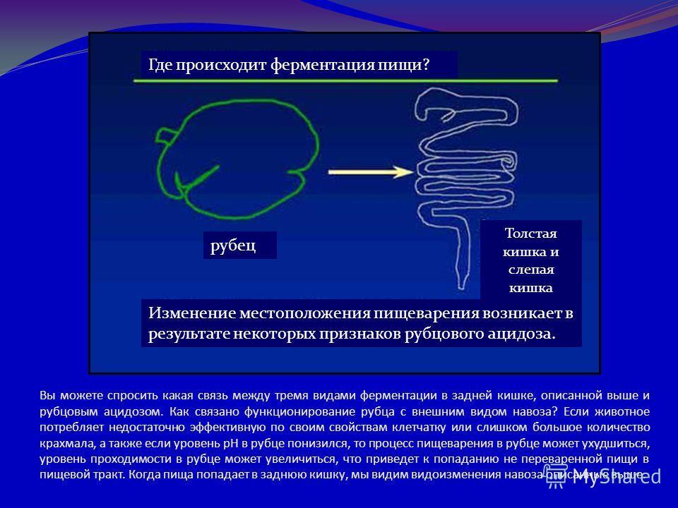 Вы можете спросить какая связь между тремя видами ферментации в задней кишке, описанной выше и рубцовым ацидозом. Как связано функционирование рубца с внешним видом навоза? Если животное потребляет недостаточно эффективную по своим свойствам клетчатк