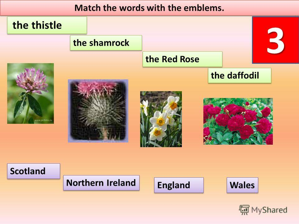 Match the words with the emblems. 3 the Red Rose the thistle Scotland England Wales the daffodil the shamrock Northern Ireland