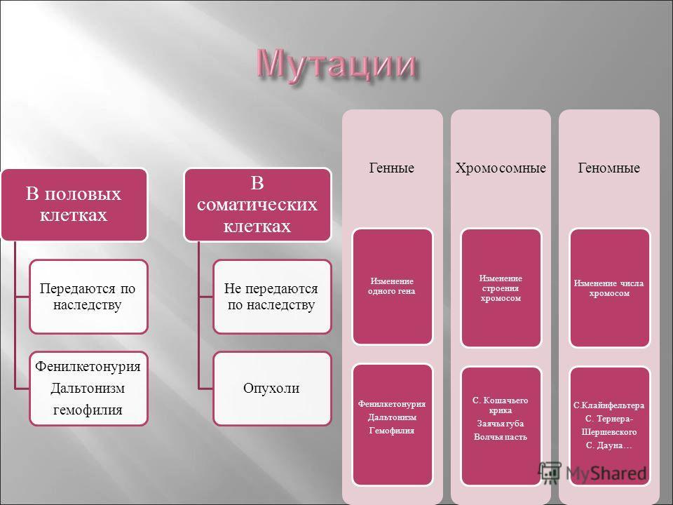 В половых клетках Передаются по наследству Фенилкетонурия Дальтонизм гемофилия В соматических клетках Не передаются по наследству Опухоли Генные Изменение одного гена Фенилкетонурия Дальтонизм Гемофилия Хромосомные Изменение строения хромосом С. Коша