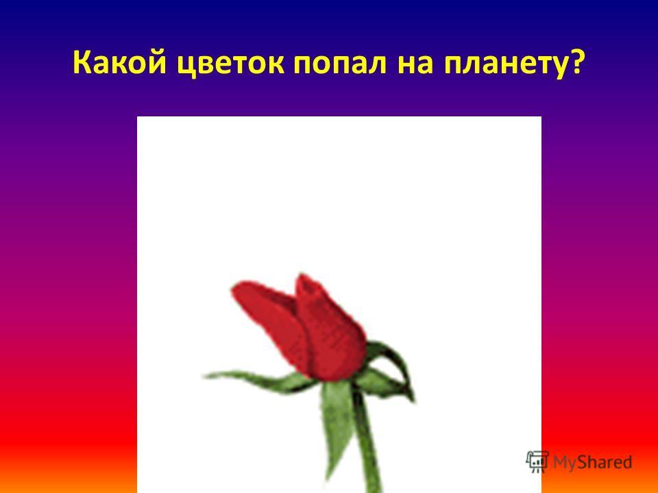 Какой цветок попал на планету?
