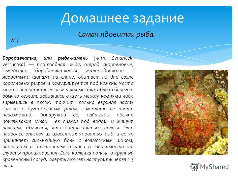 Домашнее задание Самая ядовитая рыба. Бородавчатка, или рыба-камень (лат. Synanceia verrucosa) плотоядная рыба, отряд скорпеновые, семейство бородавчатковых, малоподвижная с ядовитыми шипами на спине, обитает на дне возле коралловых рифов и камуфлиру
