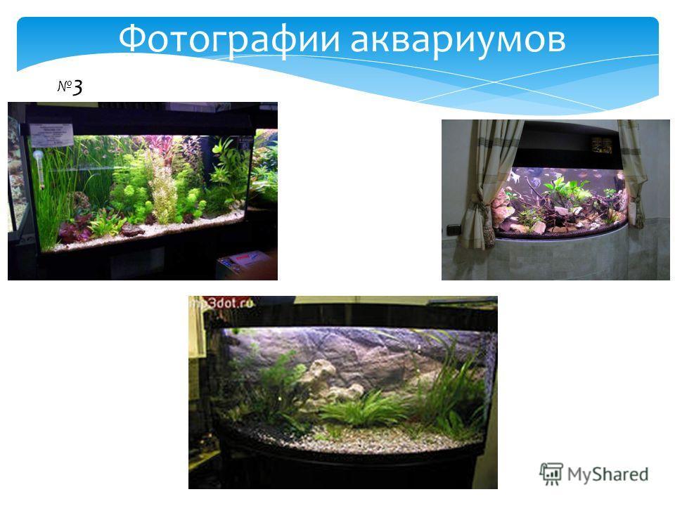 3 Фотографии аквариумов