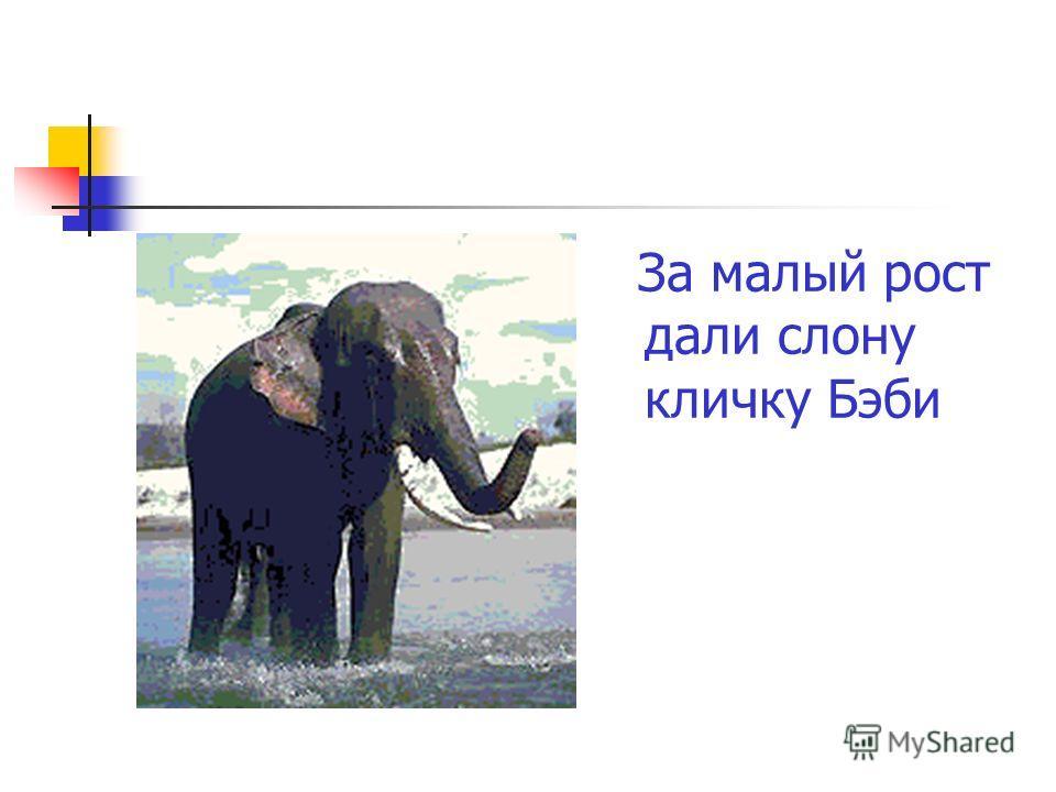 За малый рост дали слону кличку Бэби