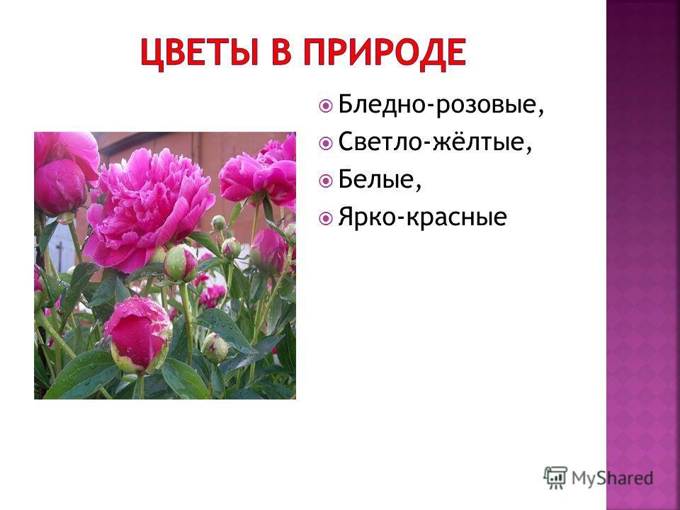 Бледно-розовые, Светло-жёлтые, Белые, Ярко-красные