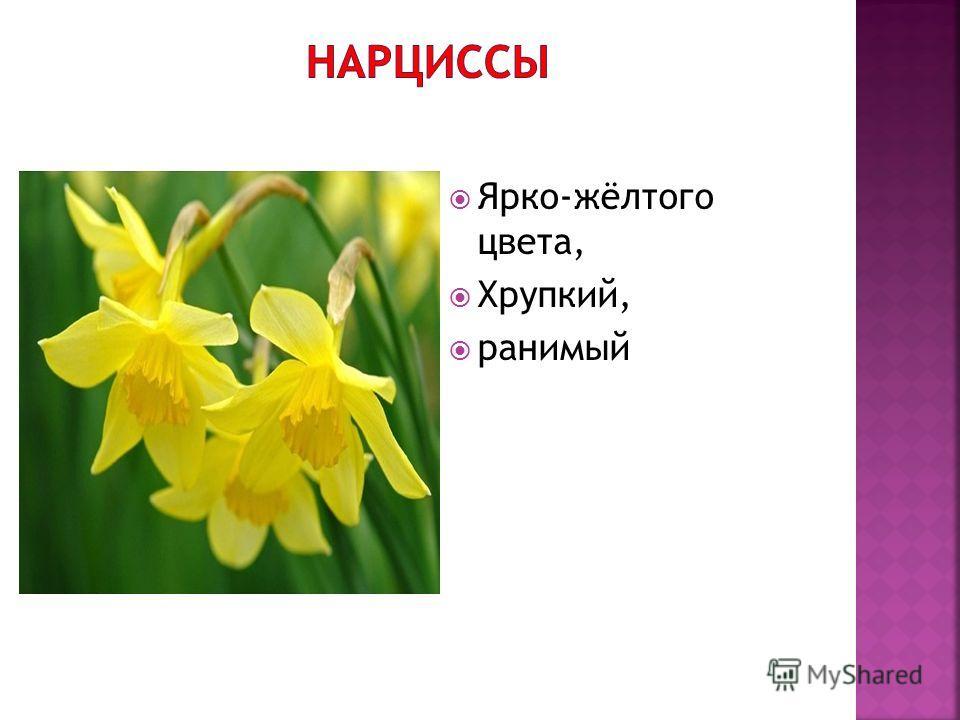 Ярко-жёлтого цвета, Хрупкий, ранимый