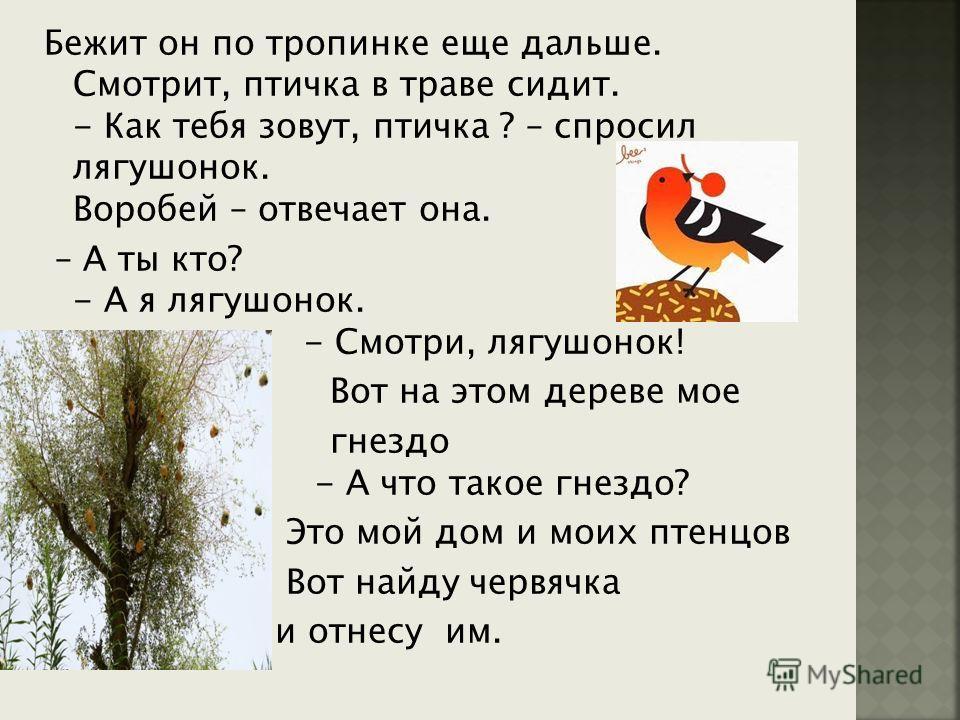 Бежит он по тропинке еще дальше. Смотрит, птичка в траве сидит. - Как тебя зовут, птичка ? – спросил лягушонок. Воробей – отвечает она. – А ты кто? - А я лягушонок. - Смотри, лягушонок! Вот на этом дереве мое гнездо - А что такое гнездо? Это мой дом
