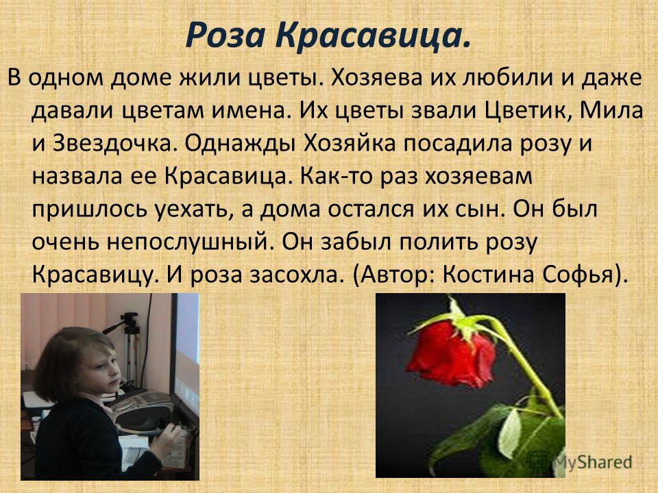 Роза Красавица. В одном доме жили цветы. Хозяева их любили и даже давали цветам имена. Их цветы звали Цветик, Мила и Звездочка. Однажды Хозяйка посадила розу и назвала ее Красавица. Как-то раз хозяевам пришлось уехать, а дома остался их сын. Он был о