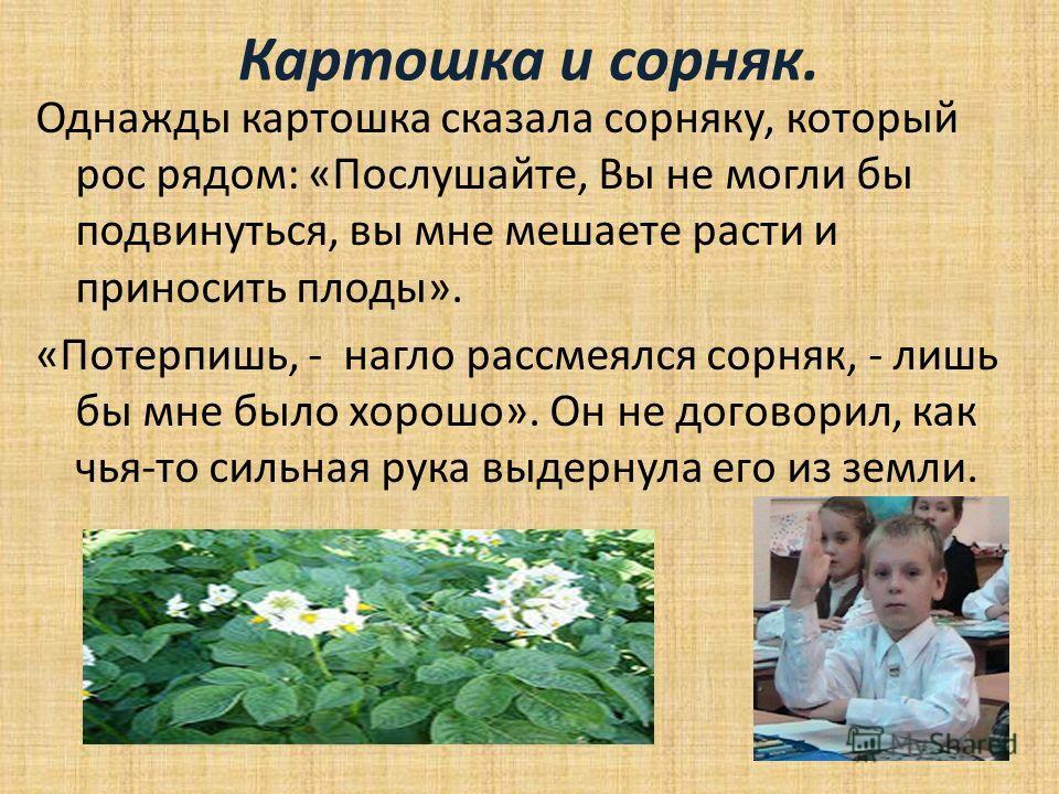 Картошка и сорняк. Однажды картошка сказала сорняку, который рос рядом: «Послушайте, Вы не могли бы подвинуться, вы мне мешаете расти и приносить плоды». «Потерпишь, - нагло рассмеялся сорняк, - лишь бы мне было хорошо». Он не договорил, как чья-то с