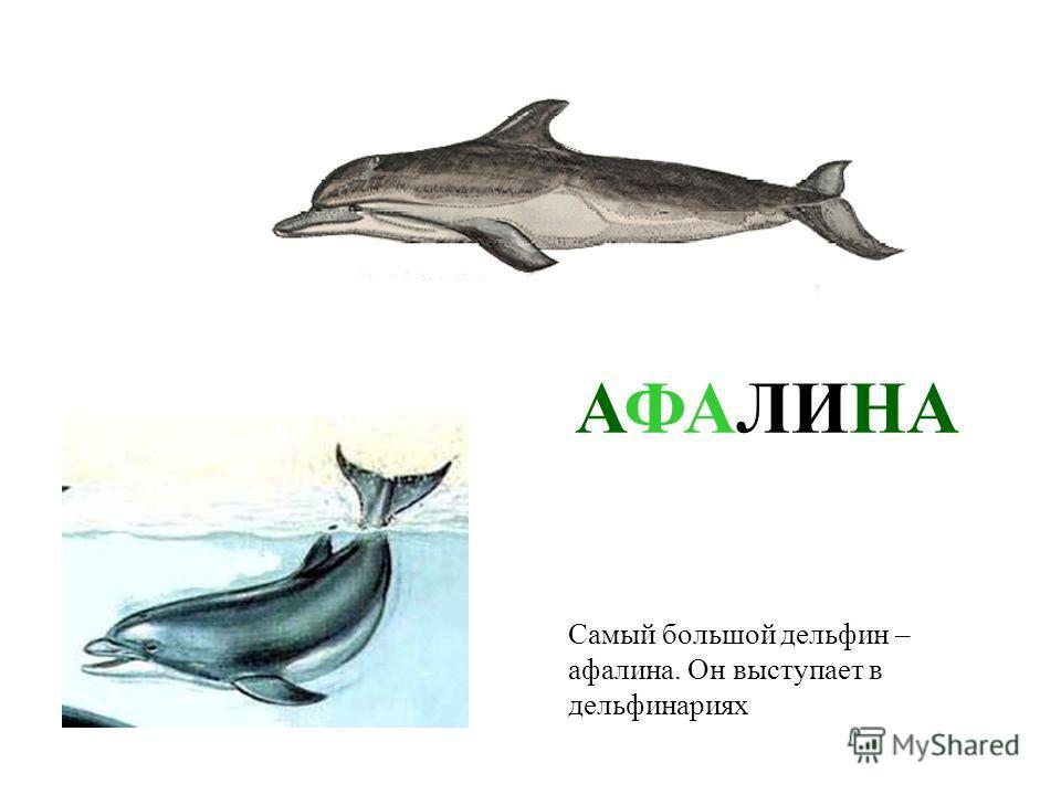 В море живут не только рыбы и моллюски, а еще и животные. Это дельфины. Если они подплывут близко к берегу, мы сможем увидеть над водой их черные спины. ДЕЛЬФИНЫ В море живут не только рыбы и моллюски, а еще и животные. Это дельфины. Если они подплыв