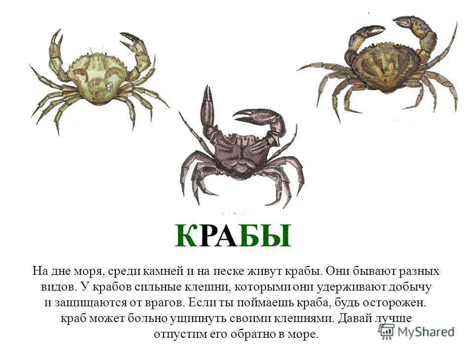 МЫ ЕДЕМ НА МОРЕ (часть 2) Мы едем на море (часть 2) papa-vlad.narod.ru
