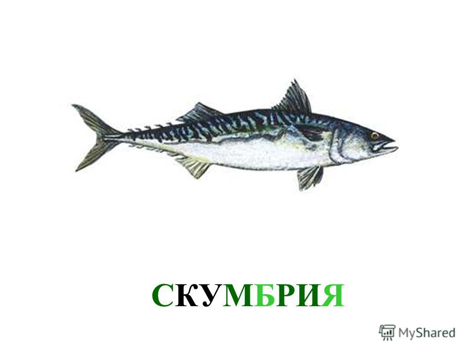 СЕЛЬДЬ В море живет очень много разных рыб. Давай познакомимся с ними. Это - сельдь. Сельдь в море живет очень много разных рыб. Давай познакомимся с ними. Это - сельдь.