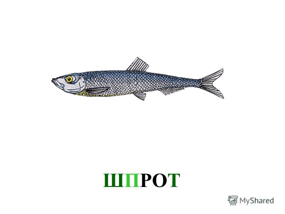 СКУМБРИЯ Скумбрия
