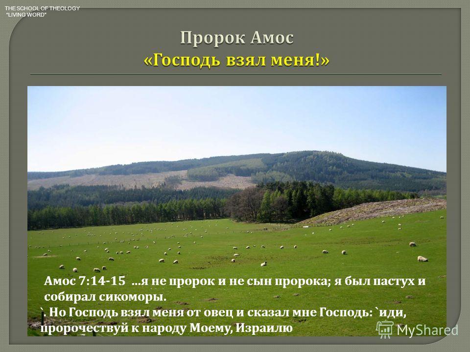 я не пророк и не сын пророка ; я был пастух и собирал сикоморы. 15 Но Господь взял меня от овец и сказал мне Господь : ` иди, пророчествуй к народу Моему, Израилю `. Амос 7:14-15 … я не пророк и не сын пророка ; я был пастух и собирал сикоморы. `. Но