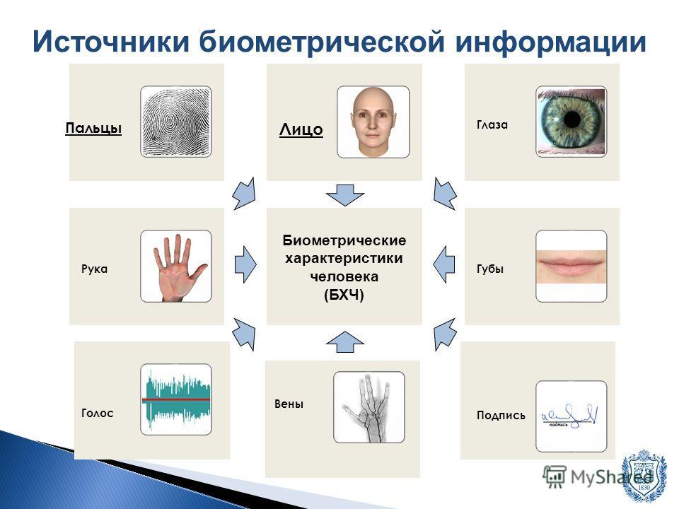 Биометрические характеристики человека (БХЧ) Источники биометрической информации Голос Рука Пальцы Лицо Глаза Губы Подпись Вены