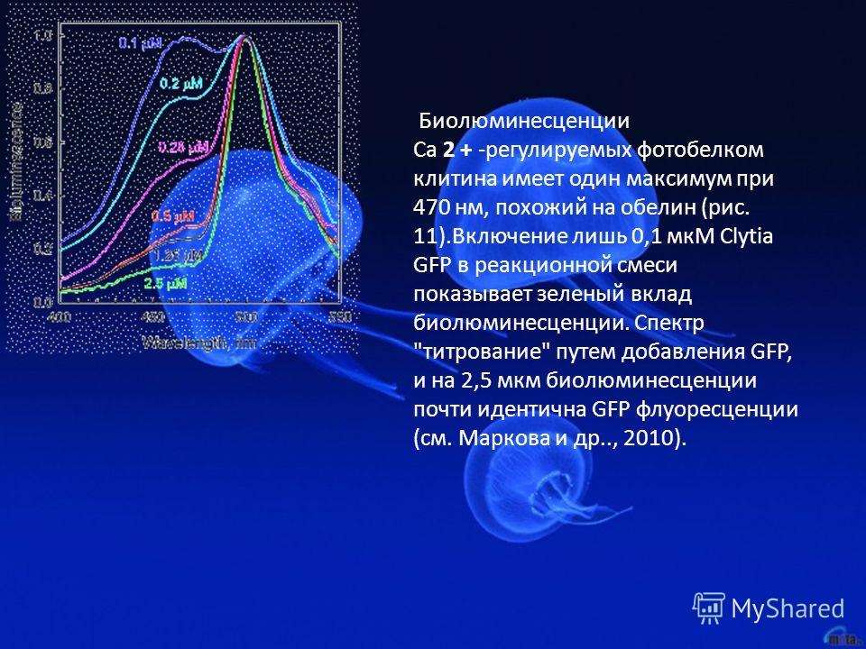 Биолюминесценции Ca 2 + -регулируемых фотобелком клитина имеет один максимум при 470 нм, похожий на обелин (рис. 11).Включение лишь 0,1 мкМ Clytia GFP в реакционной смеси показывает зеленый вклад биолюминесценции. Спектр