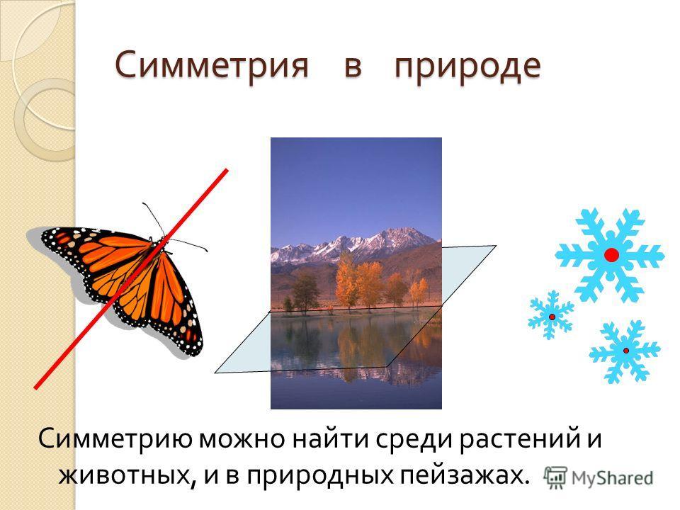 Симметрия в природе Симметрию можно найти среди растений и животных, и в природных пейзажах.