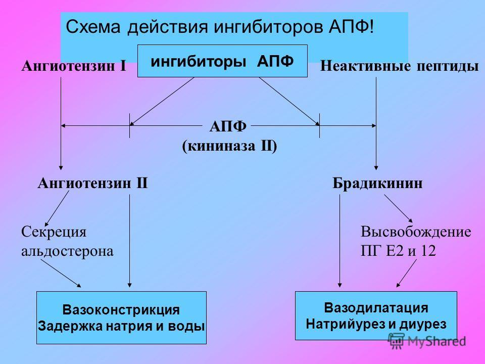 Схема действия ингибиторов АПФ! ингибиторы АПФ АПФ (кининаза II) Ангиотензин IНеактивные пептиды Ангиотензин IIБрадикинин Вазоконстрикция Задержка натрия и воды Вазодилатация Натрийурез и диурез Секреция альдостерона Высвобождение ПГ Е2 и 12