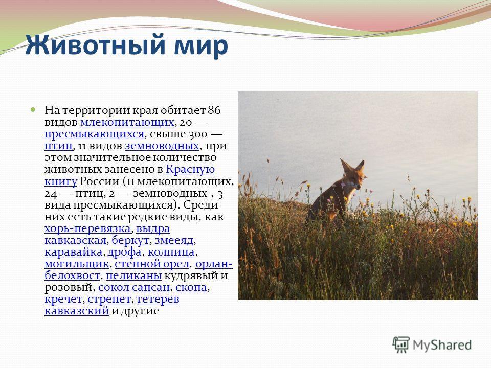 Животный мир На территории края обитает 86 видов млекопитающих, 20 пресмыкающихся, свыше 300 птиц, 11 видов земноводных, при этом значительное количество животных занесено в Красную книгу России (11 млекопитающих, 24 птиц, 2 земноводных, 3 вида пресм