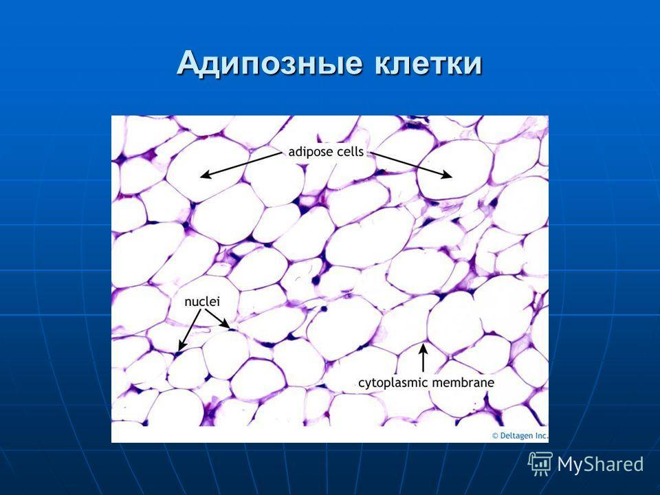 Адипозные клетки