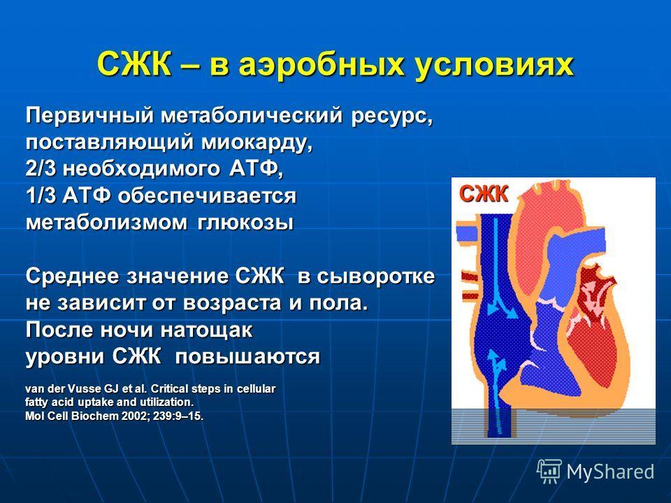 СЖК – в аэробных условиях Первичный метаболический ресурс, поставляющий миокарду, 2/3 необходимого АТФ, 1/3 АТФ обеспечивается метаболизмом глюкозы Среднее значение СЖК в сыворотке не зависит от возраста и пола. После ночи натощак уровни СЖК повышают