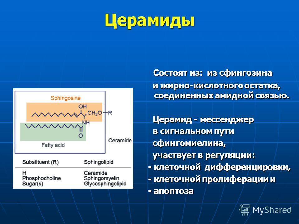Церамиды Состоят из: из сфингозина Состоят из: из сфингозина и жирно-кислотного остатка, соединенных амидной связью. и жирно-кислотного остатка, соединенных амидной связью. Церамид - мессенджер Церамид - мессенджер в сигнальном пути в сигнальном пути