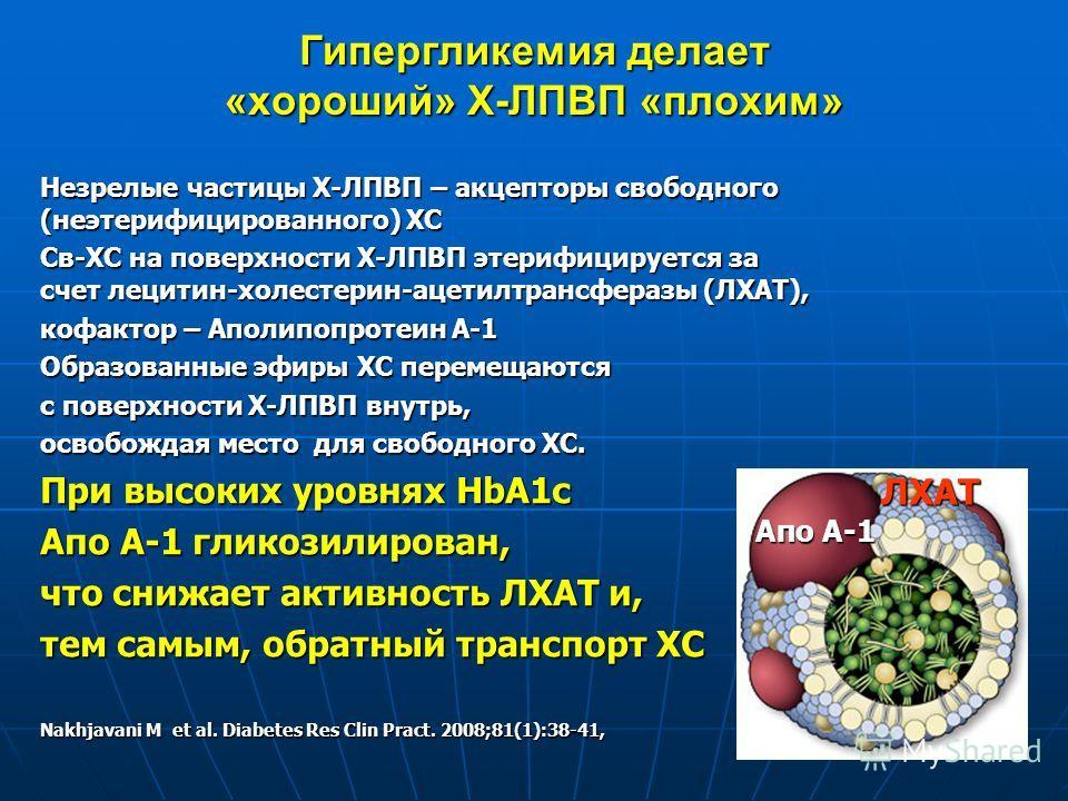 Гипергликемия делает «хороший» Х-ЛПВП «плохим» Незрелые частицы Х-ЛПВП – акцепторы свободного (неэтерифицированного) ХС Св-ХС на поверхности Х-ЛПВП этерифицируется за счет лецитин-холестерин-ацетилтрансферазы (ЛХАТ), кофактор – Аполипопротеин А-1 Обр