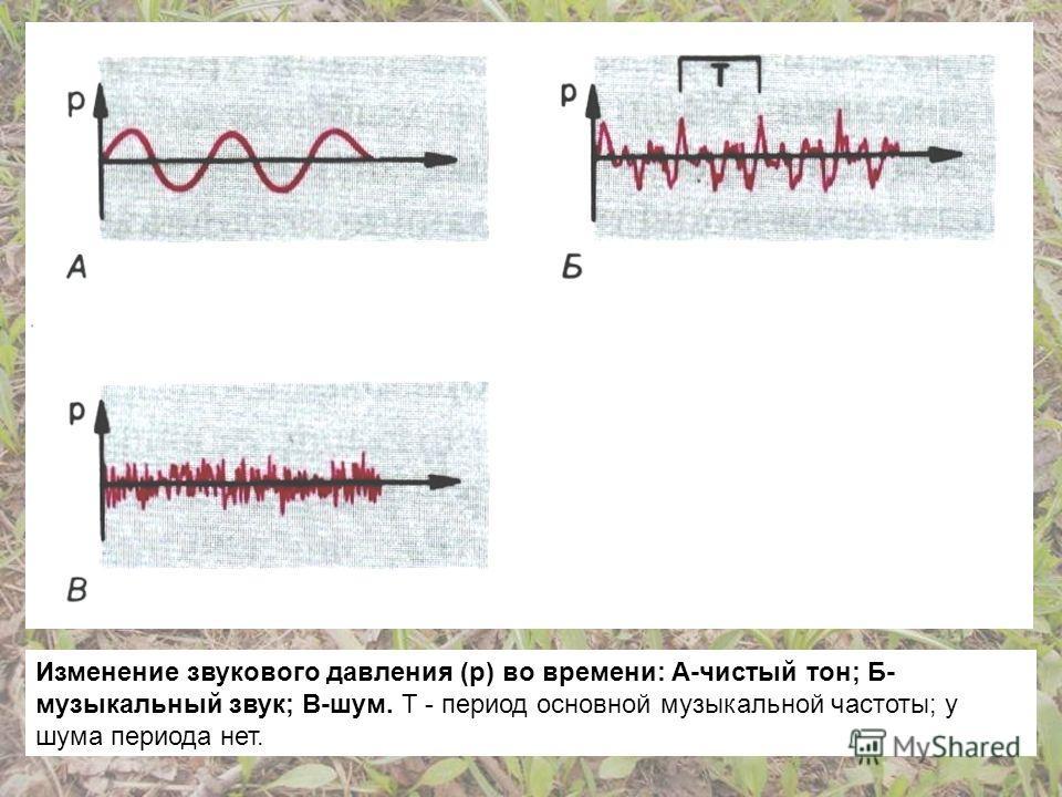 Изменение звукового давления (р) во времени: А-чистый тон; Б- музыкальный звук; В-шум. Т - период основной музыкальной частоты; у шума периода нет.