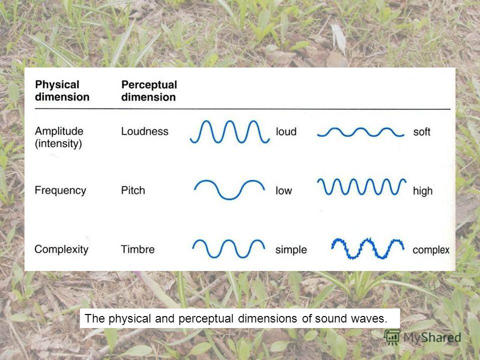 The physical and perceptual dimensions of sound waves.