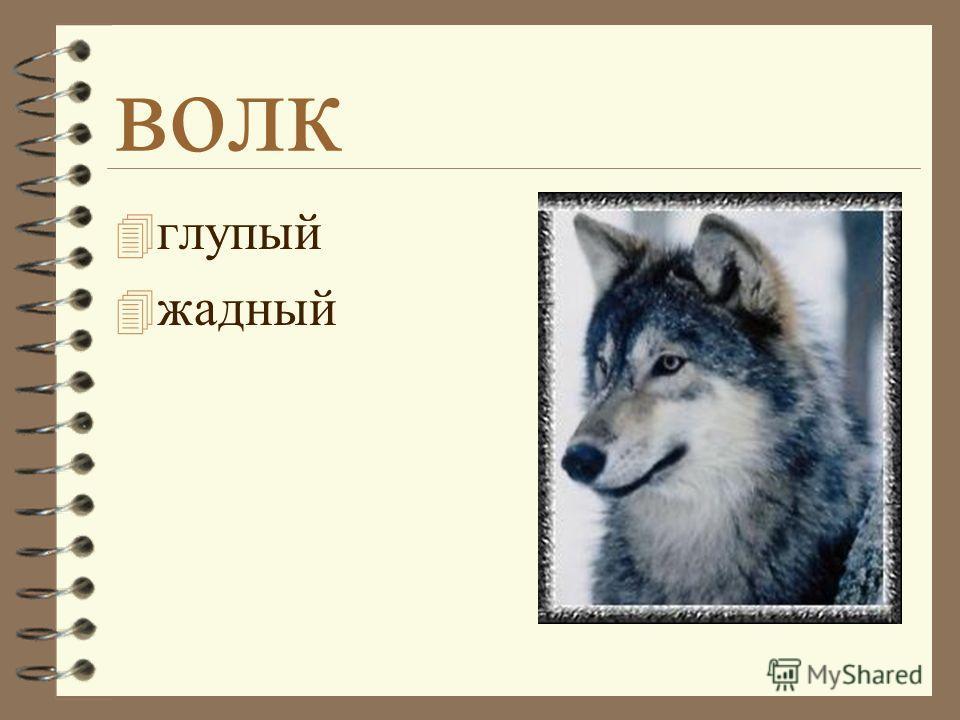 волк 4 глупый 4 жадный