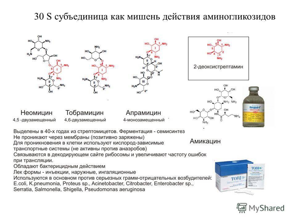3л S субъединица как мишень действия аминогликозидов 30 S субъединица как мишень действия аминогликозидов