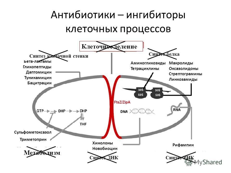 Антибиотики – ингибиторы клеточных процессов Аминогликозиды Тетрациклины Макролиды Оксазолидоны Стрептограмины Линкозамиды Рифампин Хинолоны Новобиоцин Триметоприн Сульфометоксазол Бета-лактамы Гликопептиды Даптомицин Туникамицин Бацитрацин Синтез ДН