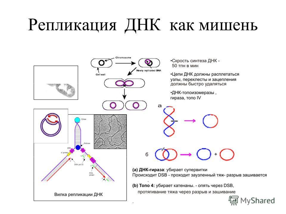 Репликация ДНК как мишень